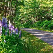 Iron Belle Trail